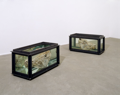 Out of Sight Out of Mind, 1991 By Damien Hirst