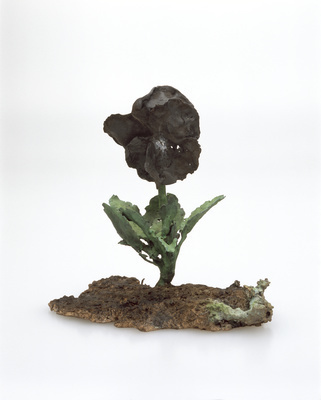 Black Pansy, 2005 By Graham Fagen