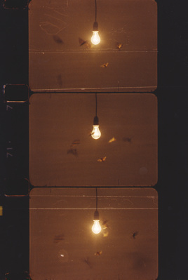 25 Watt Moon (film frames), 1996
