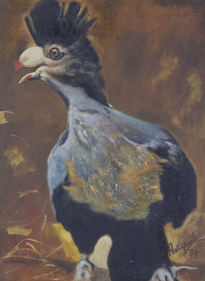 Great Blue Turaco, 1978