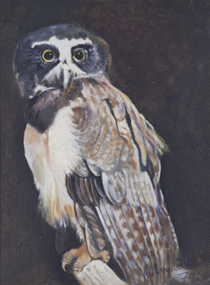 Spectacled Owl, 1979