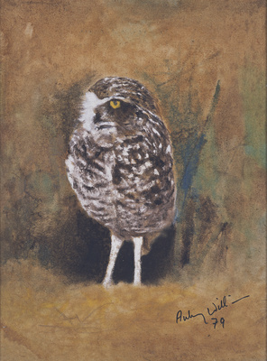 Burrowing Owl, 1979