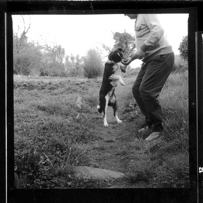 Farm Dog Visit, 1986 By Peter Finnemore