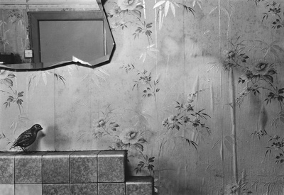 Myffin in the Wallpaper, 2010 By Peter Finnemore