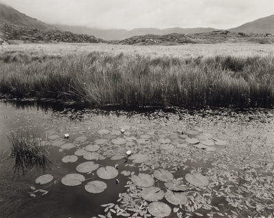 Waterlillies, Glenmore, Waterville, Kerry, Ireland, 1980 By John Davies