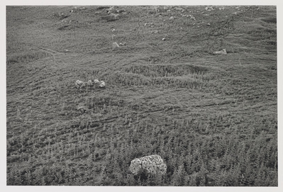 Stones and Circle, Carsington Pastures, 1979