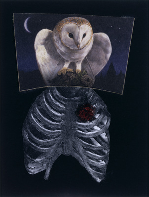 Diagnosis Drawing (owl chest), 2005