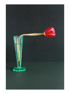 Red Tulip at A Right Angle, 2007