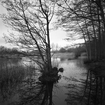 Lake, Wivenhoe, Essex, 2012