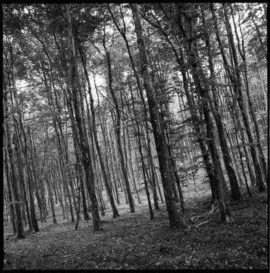 Woodland, Kennick, North Devon, 2011