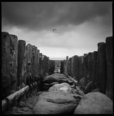Sea Groynes, Lynmouth Beach, North Devon, 2011