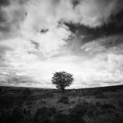 Tree, Exmoor, 2011