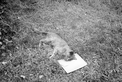 Smokey' Grey Cat on a Grey Card, 2011 By Peter Finnemore