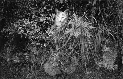 Cats 'Cwtsh', 1999 By Peter Finnemore